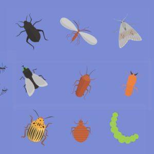 Pest Control - 2D